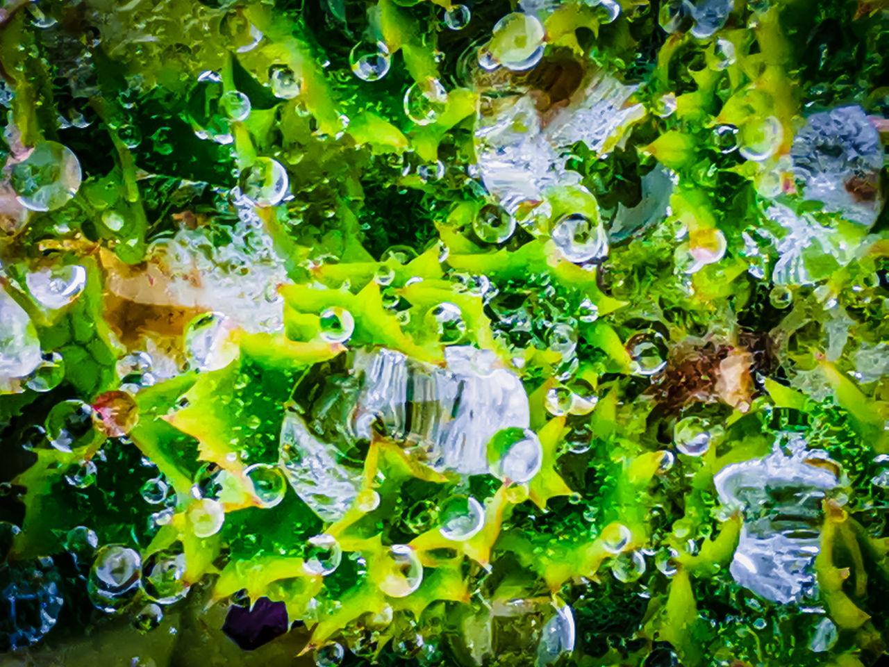 FULL FRAME SHOT OF FRESH GREEN WATER