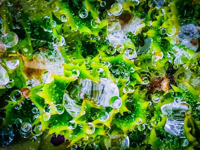 Full frame shot of leaves in sea