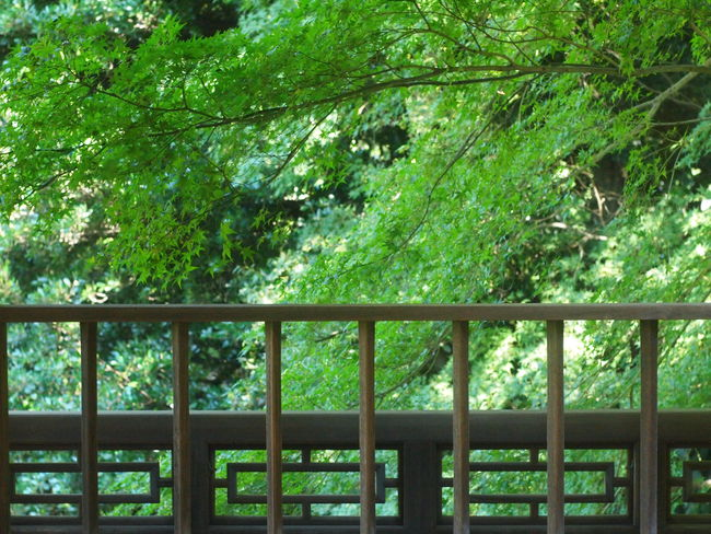 Sunny Day Shinjuku-gyoen Tokyo,Japan Nature Architecture Tree Green Color Green Growing Young Plant Greenery Leaf Vein