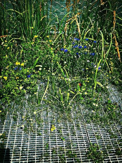 Heuresement que la nature prend toujours le dessus nNaturelovers Flowers