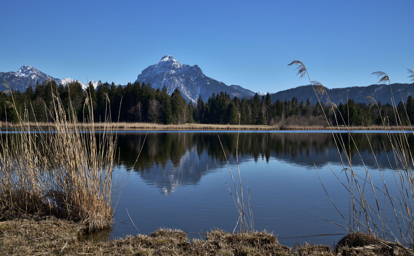 View Over Hopfensee To The Säuling Summit Mountain Lake Water Sky Reflection Beauty In Nature Tranquility Tranquil Scene Scenics - Nature Plant Nature Mountain Range No People Tree Non-urban Scene Idyllic Day Blue Clear Sky Snowcapped Mountain Mountain Peak Landscape_Collection Landcape Season  Springtime Bavarian Alps Bavarian Landscape Hopfensee EyeEm Nature Lover Enjoying The View Nikon Nikonphotographer Sigma Lens Travel Photography Travel Silence Of Nature Summit View Outdoors