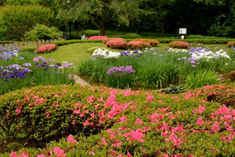 Imperial Palace Garden Tokyo,Japan Day Flower Flowerbed Green Color Outdoors Pink Color Plant Purple Tokyo Photography