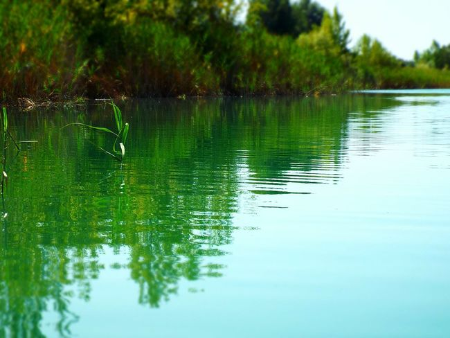 Lake Laghetto  Lago Water Acqua Specchio Shadow Sfumature Riflesso Piante Erba Relaxing Reflection Green Verde Nature Natura EyeEm Nature Lover EyeEm Fresh Acqua Limpida