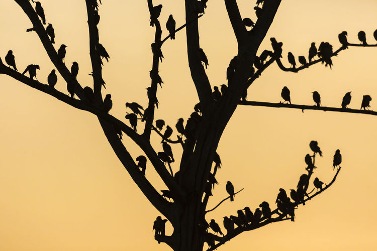 Low angle view of silhouette birds perching on tree