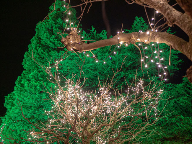 Plant Night Green Color Tree Illuminated Nature No People Growth Close-up Christmas Decoration Celebration Christmas Branch Outdoors Christmas Lights Decoration Focus On Foreground christmas tree Beauty In Nature Land