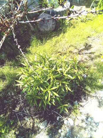 Nature Nature Green Color Plant