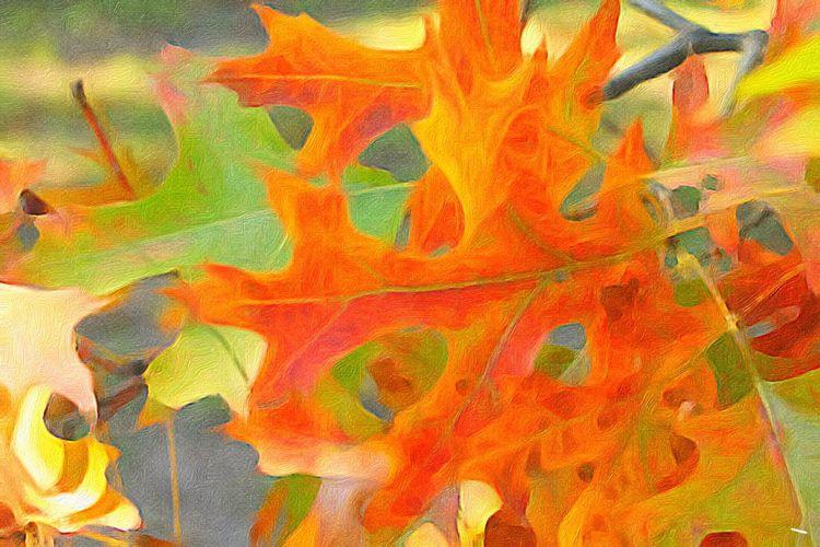 Backgrounds Vibrant Color Multi Colored Paint Edit Autumn Colors Oak Leaves