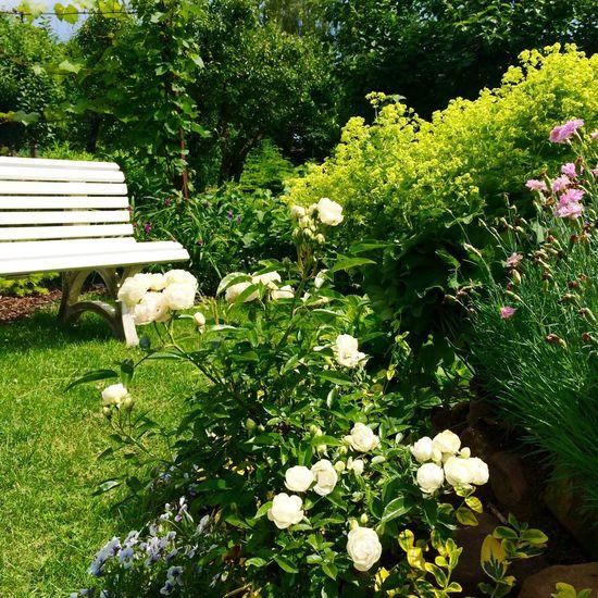 Urlaub Flowers,Plants & Garden Garden Photography Nature Weekend Sonne Sommer Gardening Lieblingsplatz