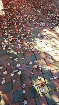 Scattered ever so perfectly as if the wind had done so with purpose, to welcome you home. Fallen Leaves Autumn Leaves Authentic Moments Purpose Beauitful Arrangement Effortlessly Purposeful Beauty Welcomehome Sacramento California Simplethings Enjoy Life Smile Loved
