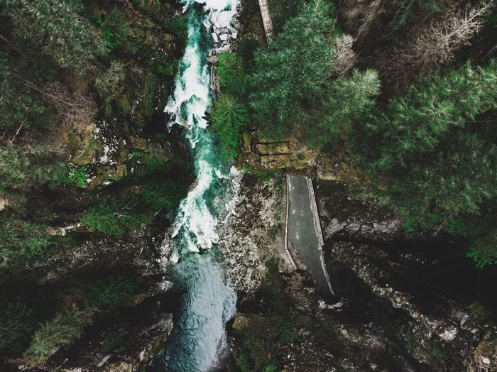 Rapids Forest Canada Drone  Nature Bc Rapids River Tunnel Plant Tree Water Green Color Nature Day Growth No People High Angle View Outdoors Full Frame Forest Wet