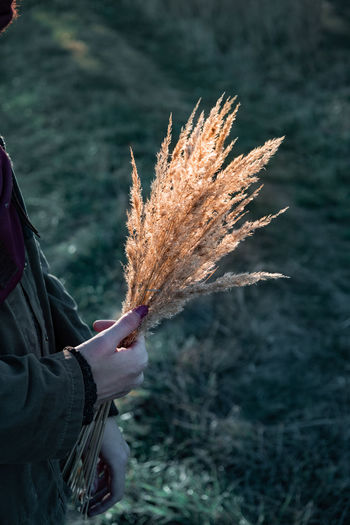 Midsection of woman holding dry grass