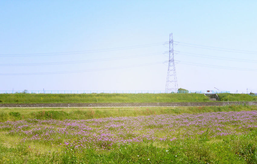 Agriculture Beauty In Nature Cable Clear Sky Connection Day Electricity  Electricity Pylon Field Flower Fuel And Power Generation Growth Landscape Nature No People Outdoors Power Line  Power Supply Rural Scene Scenics Sky Technology Tranquil Scene Tranquility Tree