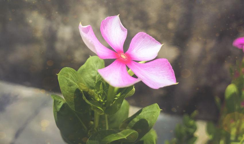 pink! Flowering