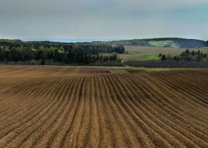 Planted potato field in spring. Landscape Agriculture Field Rural Scene Scenics Potato Field Plowed Field Sky Horizontal No People Betterlandscapes