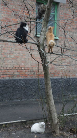 Bad Cats Love Constant