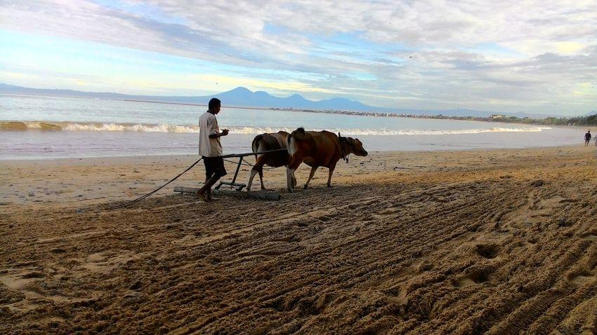 tradisional beach cleaning jimbaran bali