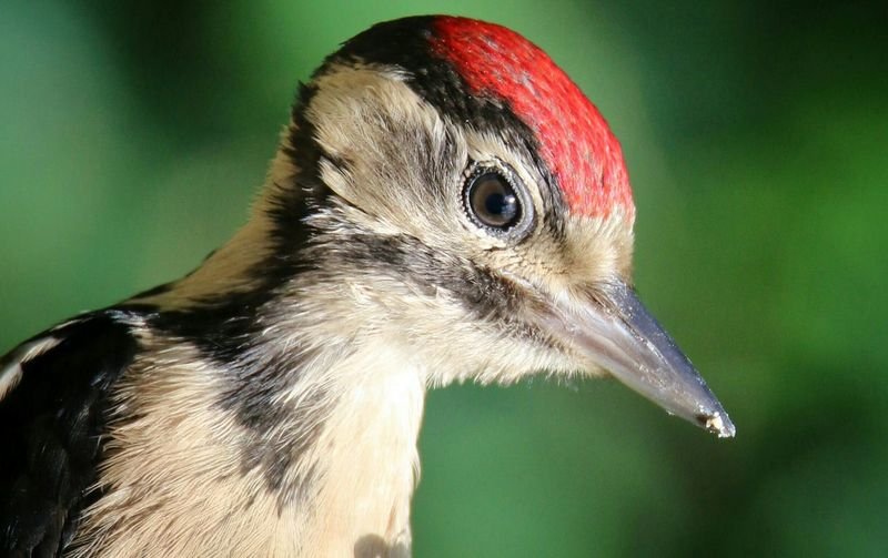 Woodpecker Extreme Close Up From My Point Of View Outdoors Photograpghy  Capture The Moment Fine Art Photography EyeEm Nature Lover Taking Photos No People Animals In The Wild Wildlife Outdoor Photography