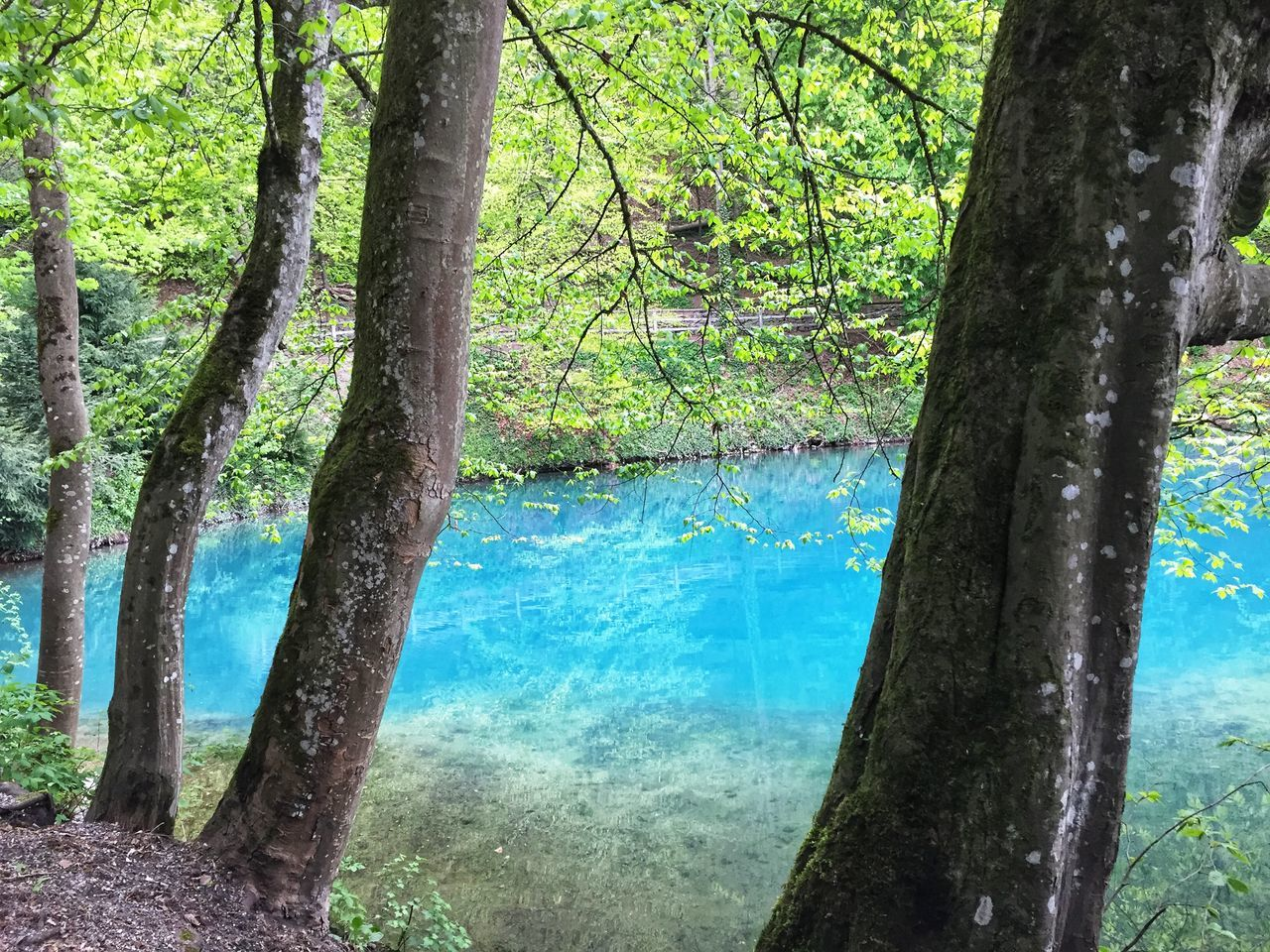 tree, plant, trunk, tree trunk, nature, water, forest, land, beauty in nature, no people, growth, tranquility, day, scenics - nature, tranquil scene, outdoors, blue, branch, lake, turquoise colored