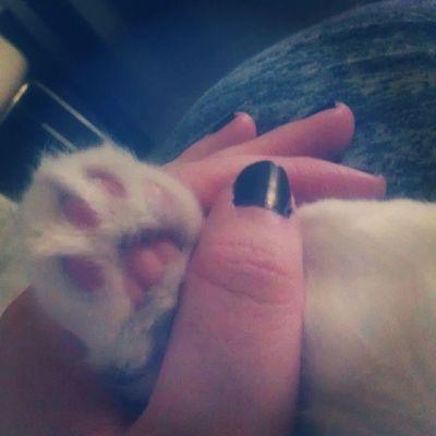 En el día internacional del gato os enseño la patita de mi amor Gatolicismo Cat Srenrique Patitaspoderosas