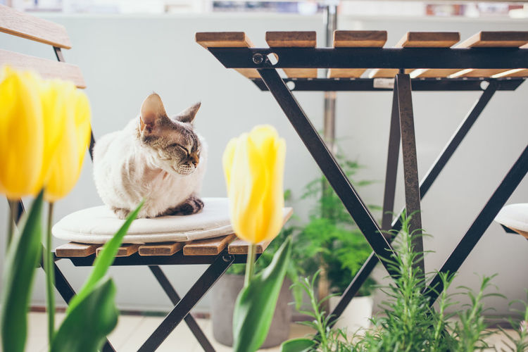 View of cat on yellow flower