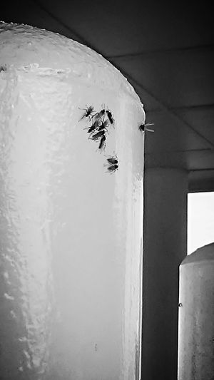 Flying Ant Ants Taking Photos Hello World Summer Summertime Summer Bug Hanging Out City At The Bank Black And White Photography