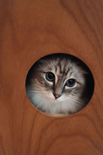 Close-up portrait of cat seen through hole