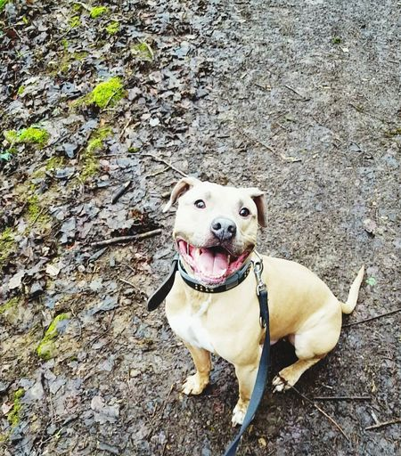 Happy Happyface Happiness Is.... Sitting Pretty Buddy Human Dog Into The Woods Amstaff Portrait Smiling Dog Smile Life Is Good Dogs Of EyeEm ImSoHappy Sharing A Moment Taking A Walk Pet Portraits This Is Family