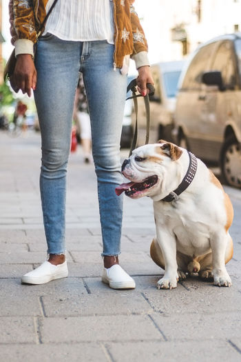 Low section of woman with dog standing in city