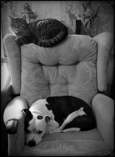 dog love cat Dog Pet Portraits Pets Pet Corner No Place Like Home Pets Pet Photography  Taking Photos Taking Pictures Blackandwhite Black And White Black And White Photography Black And White Collection  Black And White Photo Blackandwhite Photography Blackandwhitephotography Monochrome Pets Dog Sleeping Napping Laziness Resting Tired At Home Cat Domestic Cat Feline Sofa Couch