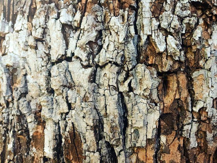 Tree Tree Ring