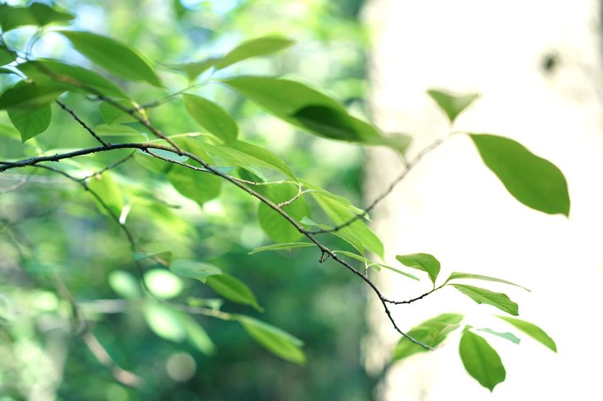 Sommerhaus, später, später Full Frame Backgrounds Abstract depth of field Plant Part Leaf Plant Green Color Growth Nature Branch Close-up No People Beauty In Nature Tree Focus On Foreground Day Outdoors Sunlight Selective Focus Twig Freshness Tranquility