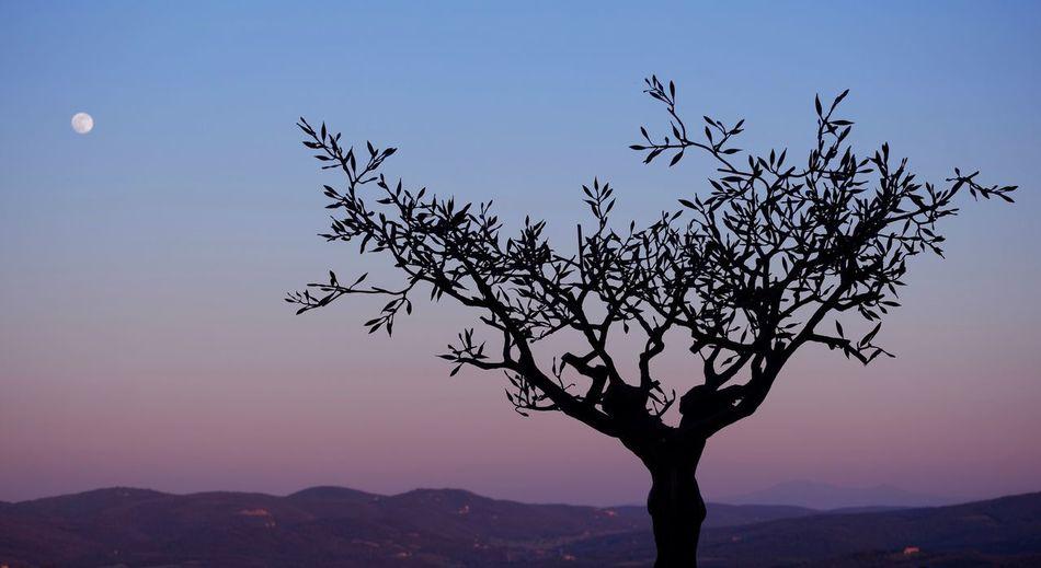 Mettici un filtro se vuoi rovinarlo. Tuscany Sunset Art Found On The Roll