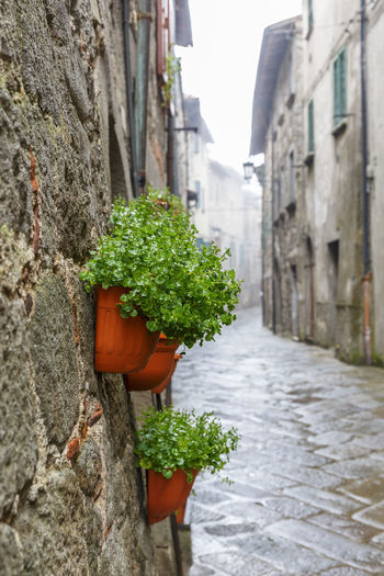 Potted plants by wall in city