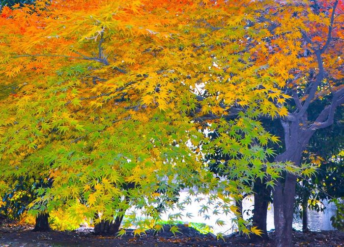 Autumn Tree 🌲 Autumn Leaf Outdoors Nature Change Tree Beauty In Nature