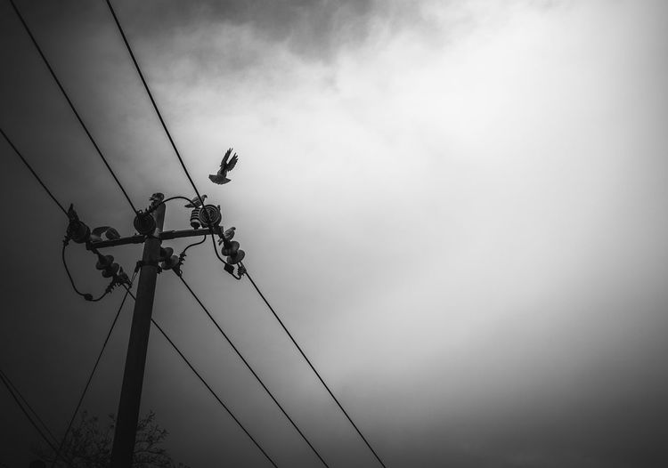 Low angle view of bird perching on electricity pylon against sky