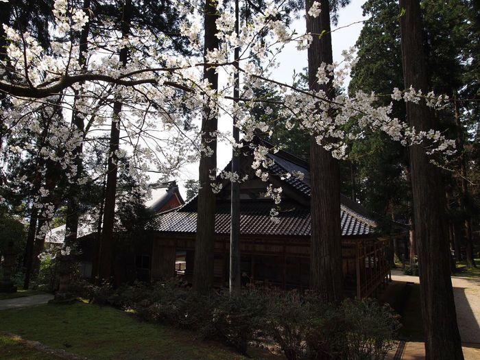 2017.04.16 富山県 南砺市 安居寺 安居寺公園