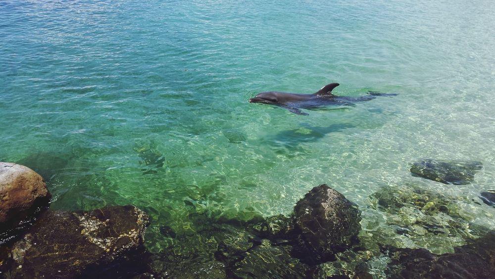 Dolphin Oceanadventure Subic