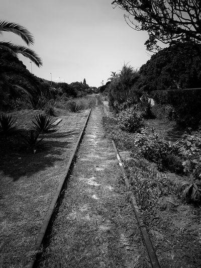 Abandoned Railtracks Rail Overgrown Abandoned Outdoors Day No People Nature Sky Tree