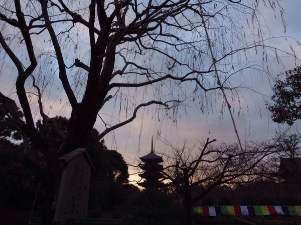 Kyoto Japan Toji Temple Temple Sunrise Tree Shadow Morning Olympus PEN-F 京都 日本 東寺 五重塔 寺 影 夜明け 朝