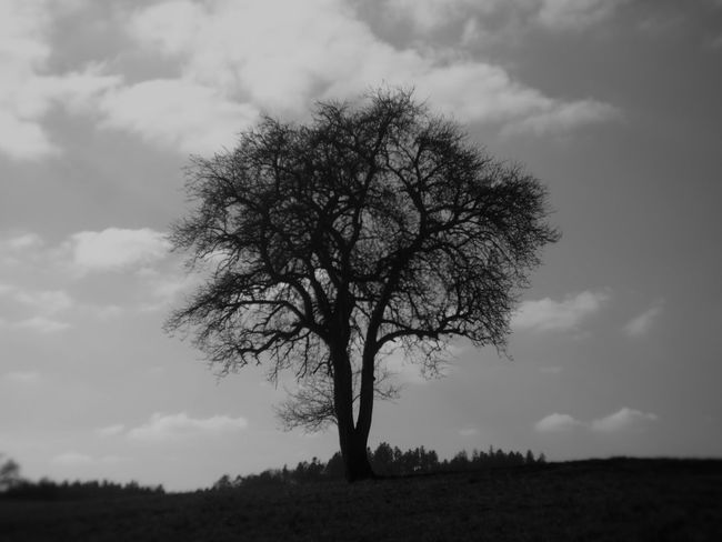 one old tree Black & White Holga Holga Photography Holga Lens Bare Tree Beauty In Nature Black And White Blackandwhite Blackandwhite Photography Branch Day Grey Grey Sky Holgalens Isolated Landscape Lone Majestic Nature No People Outdoors Sky Solitude Tranquility Tree