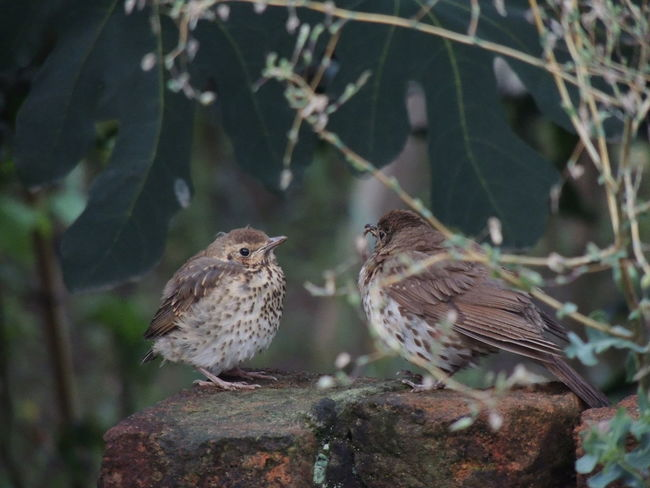 Animal Animal Themes Animal Wildlife Animals In The Wild Bird Close-up Day Focus On Foreground Group Of Animals Nature No People Outdoors Perching Plant Plant Part Sparrow Togetherness Tree Two Animals Vertebrate