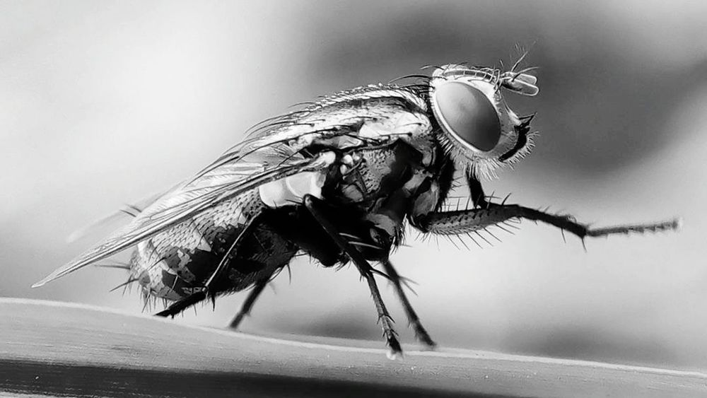 BW_photography Bwphotography Bw_lover Bw_indonesia Bw Photography Bw Streetphotography Bw_collection Bw_society Insect Insect Photography Macro Insect Photo Macro_collection Macroshot Insect Photography Macro Close Up Extreme Close-up Macroinsect Macrophotography Insects Macro MobilePhotograpy Macro Insects Macro Photography Macrophonegraphy Macro World Macro Capture Bwstyles_gf