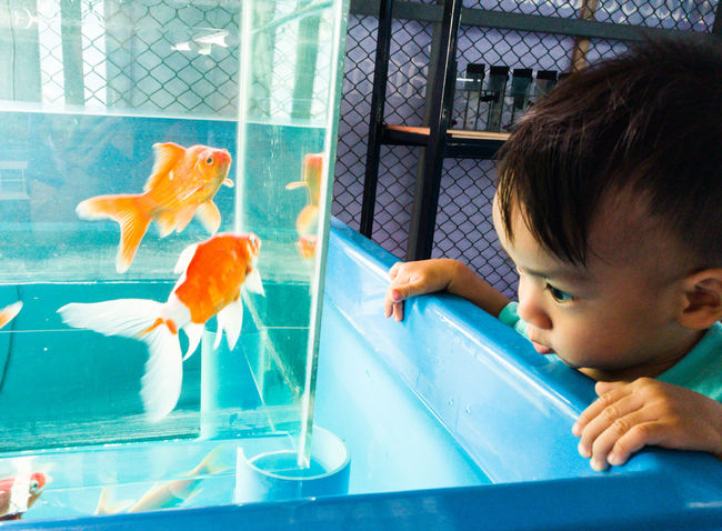 I want to know your world Fish!!a boy observe life of golden fish. Live For The StoryBeauty In Nature Animals In Captivity Fish Childhood Animal Themes Child Aquarium Indoors  Boys Swimming Goldfish Water People