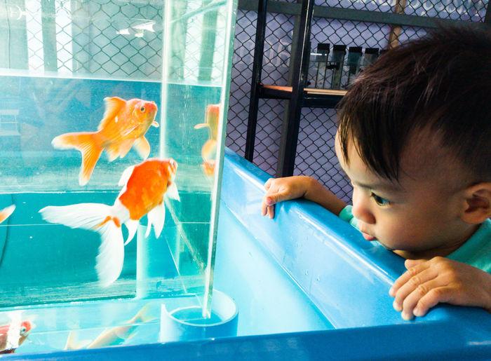 Boy Looking At Aquarium
