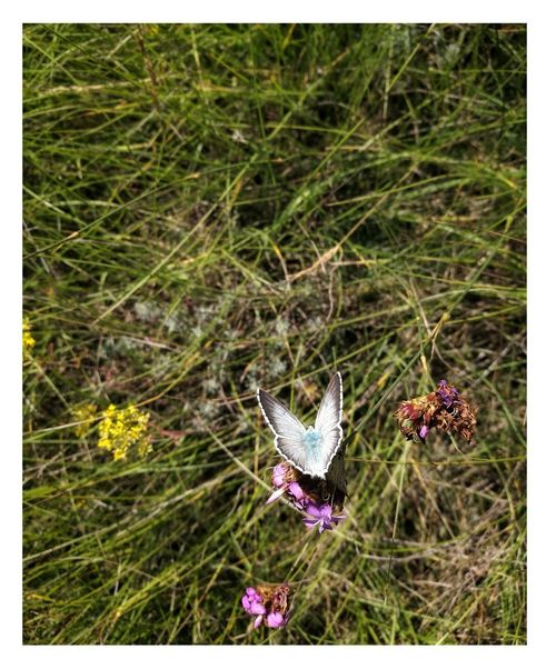 butterfly Flower Insect Field Grass Close-up Plant