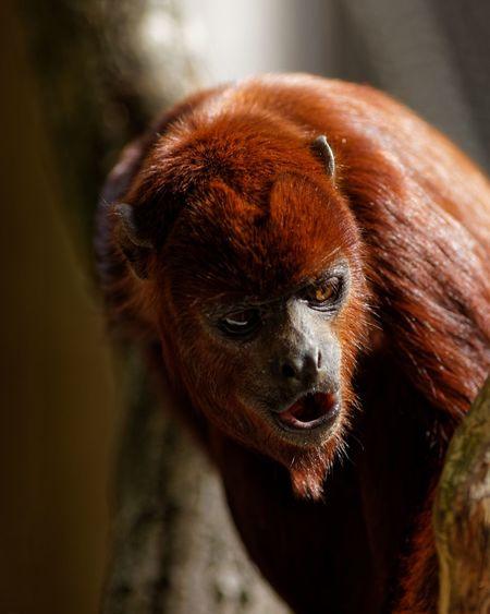 Oh One Animal Animal Themes Animal Mammal Focus On Foreground Animal Wildlife Primate Monkey Looking Away