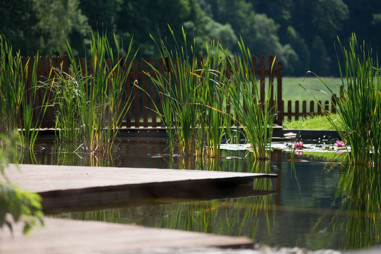 Pond Beauty In Nature Day Growth Lake Nature No People Outdoors Pool Reeds Reflection Tree Water Waterfront