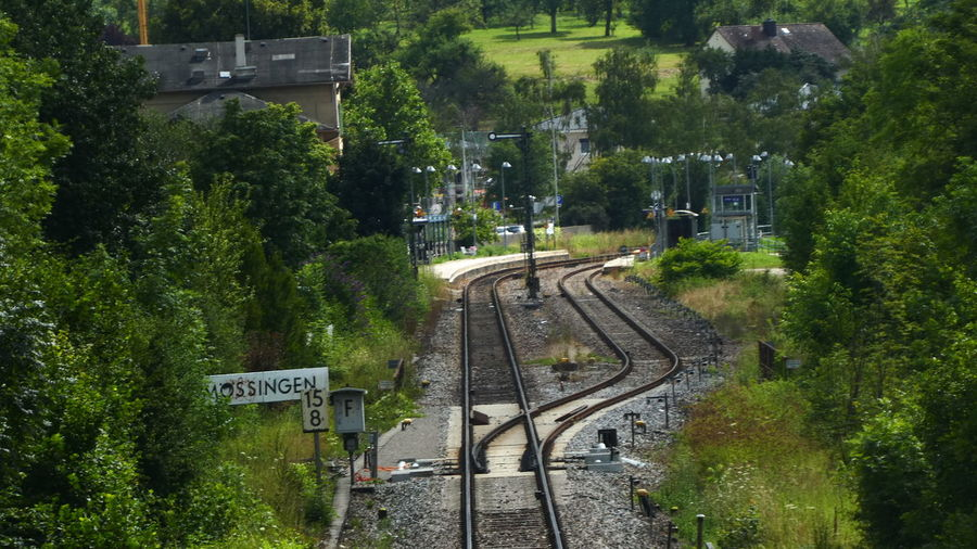 View of railroad track amidst trees