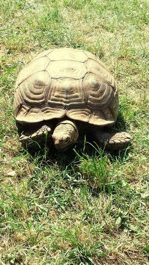 Animal Themes Animals In The Wild Tortoise Tortoise Shell Outdoors Maurizio Rancati
