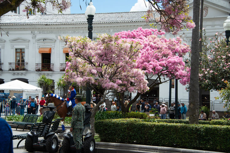 View of cherry blossom tree in front of building